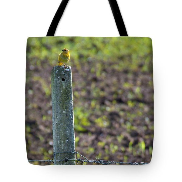 Canary Stop Tote Bag