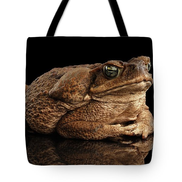 Cane Toad - Bufo Marinus, Giant Neotropical Or Marine Toad Isolated On Black Background Tote Bag