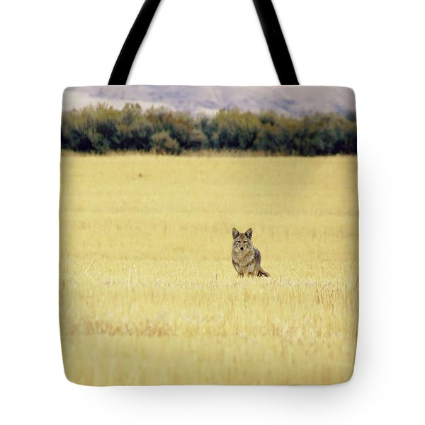 Canidae Tote Bag