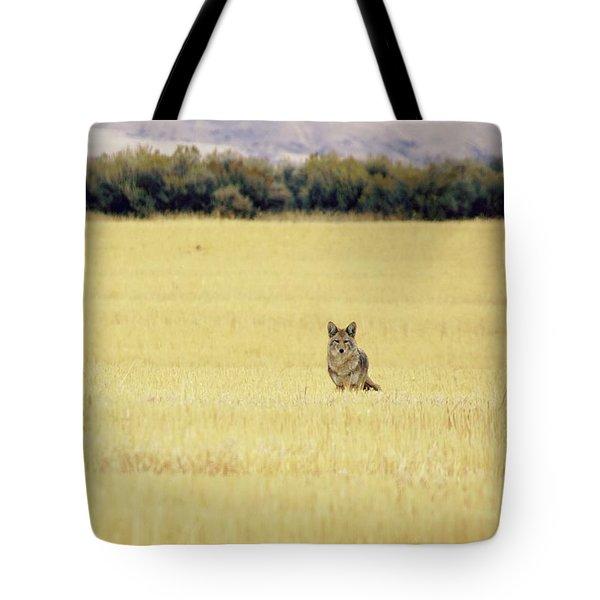 Canidae Tote Bag