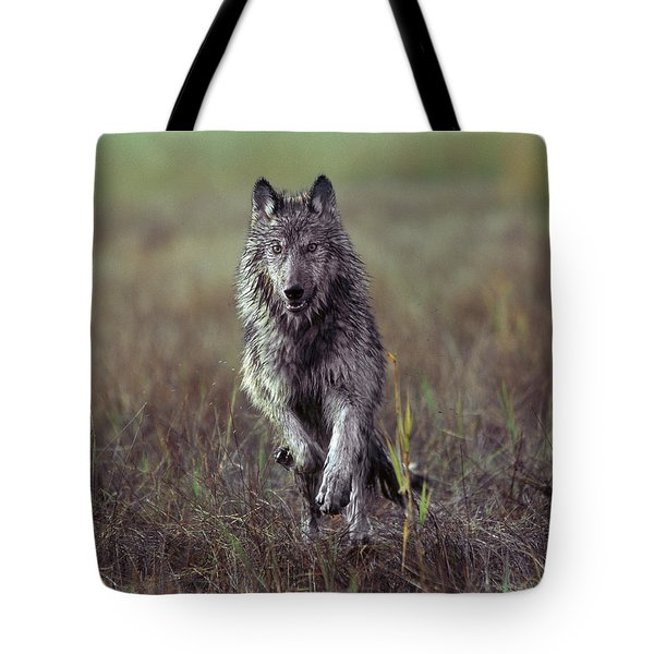 Canis Lupus Tote Bag by Tim Fitzharris