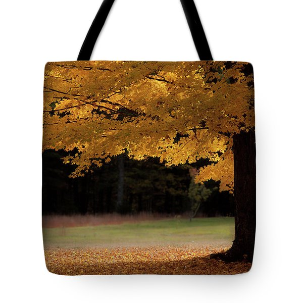 Canopy Of Autumn Gold Tote Bag
