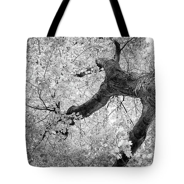 Canopy Of Autumn Leaves In Black And White Tote Bag