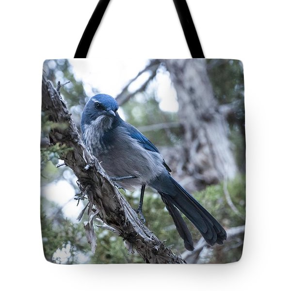 Canyon Jay Tote Bag