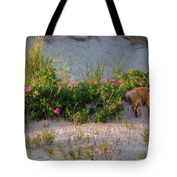 Tote Bag featuring the photograph Cape Cod Beach Fox by Bill Wakeley