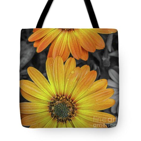Cape Daisy's - Orange Tote Bag