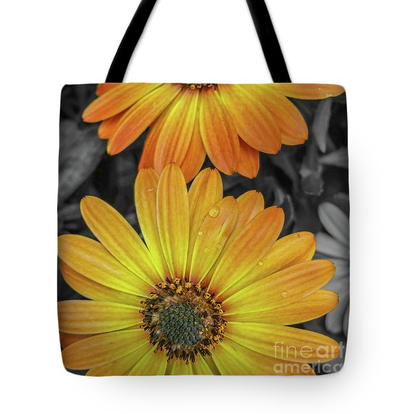 Cape Daisy's - Orange Tote Bag