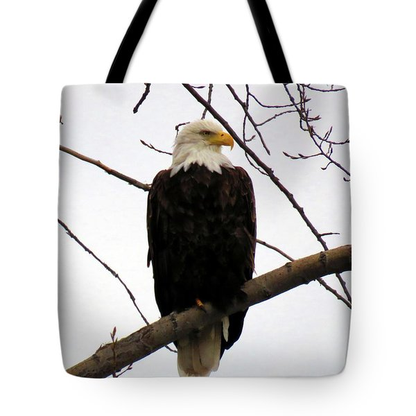 Cape Eagle Tote Bag