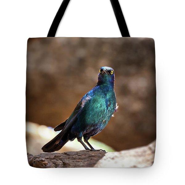 Cape Glossy Starling Tote Bag