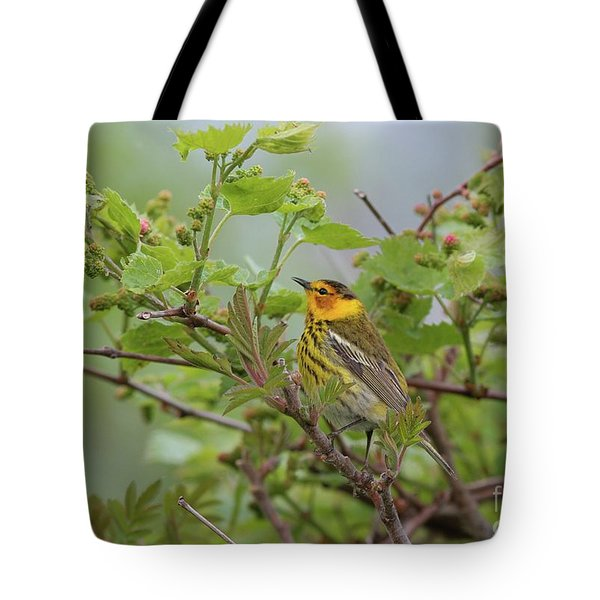 Cape May Warbler Tote Bag
