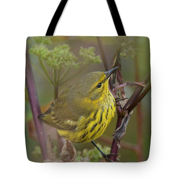 Cape May Warbler In Wees Tote Bag