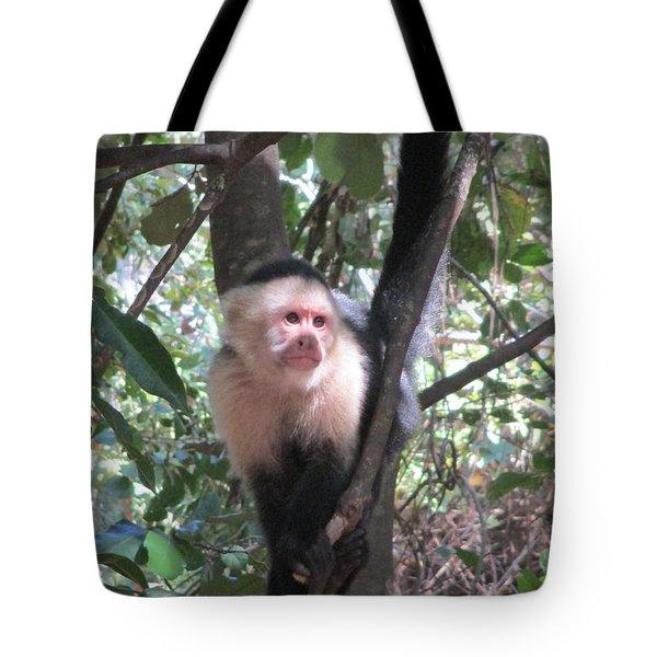 Capuchin Monkey 4 Tote Bag by Randall Weidner