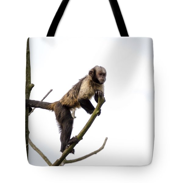 Tote Bag featuring the photograph Capuchin Monkey by Scott Lyons