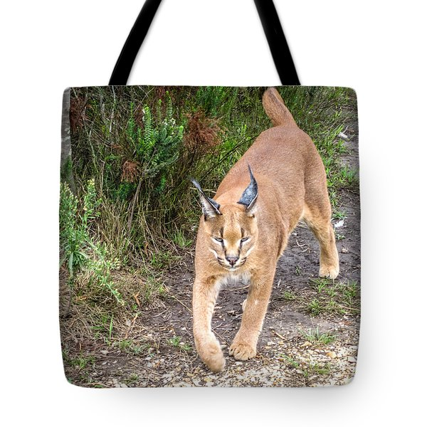 Tote Bag featuring the photograph Caracal Hunting by Gregory Daley  PPSA