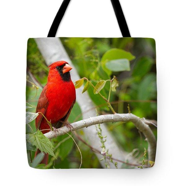 Cardinal 147 Tote Bag