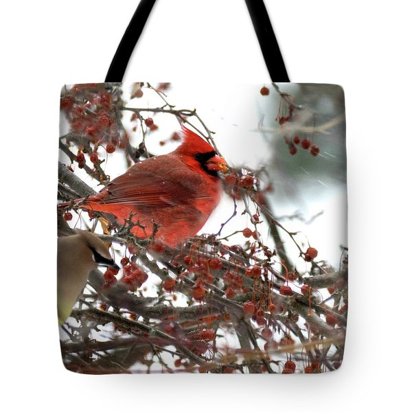 Tote Bag featuring the photograph Cardinal And Cedar Wax Wing Feeding On Crab Apples by Betty Pauwels