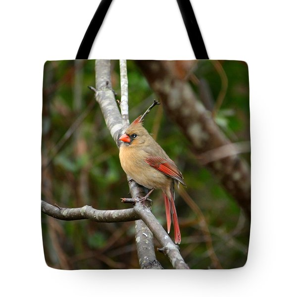 Tote Bag featuring the photograph Cardinal by Cathy Harper