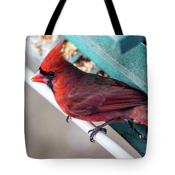 Tote Bag featuring the photograph Cardinal Close Up by Darryl Hendricks