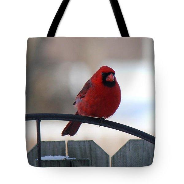 Cardinal Closeup Tote Bag