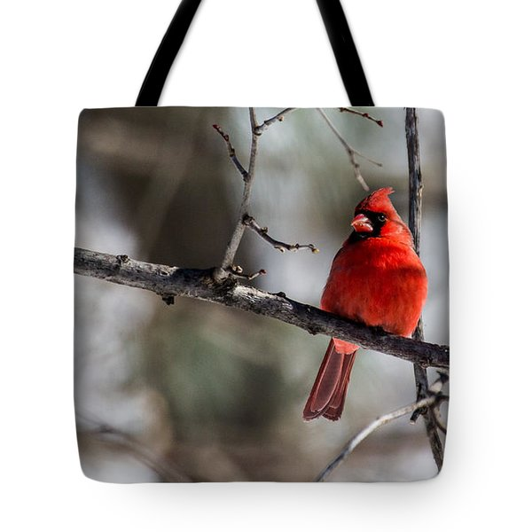 Tote Bag featuring the photograph Cardinal by Dan Traun