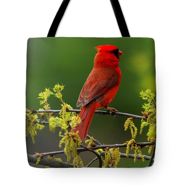 Cardinal In Early Spring Tote Bag