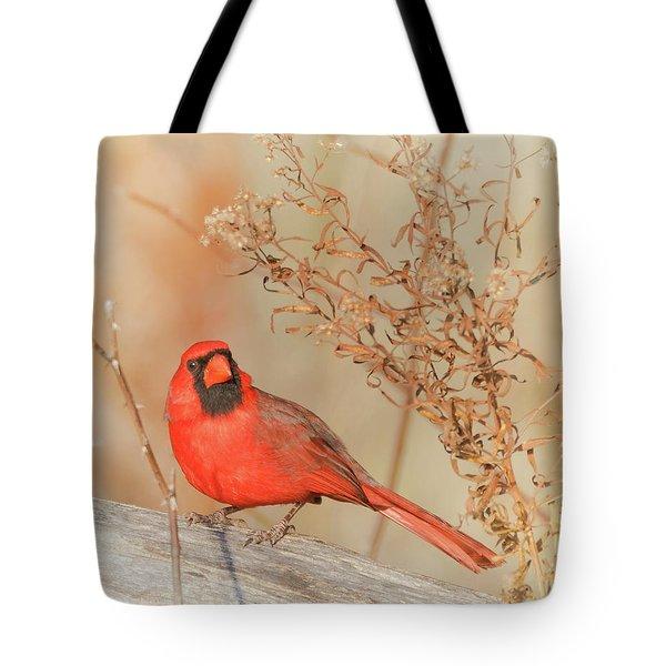 Cardinal In Fall  Tote Bag