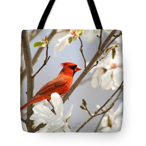 Tote Bag featuring the photograph Cardinal In Magnolia by Angel Cher