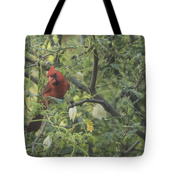 Cardinal In Mesquite Tote Bag