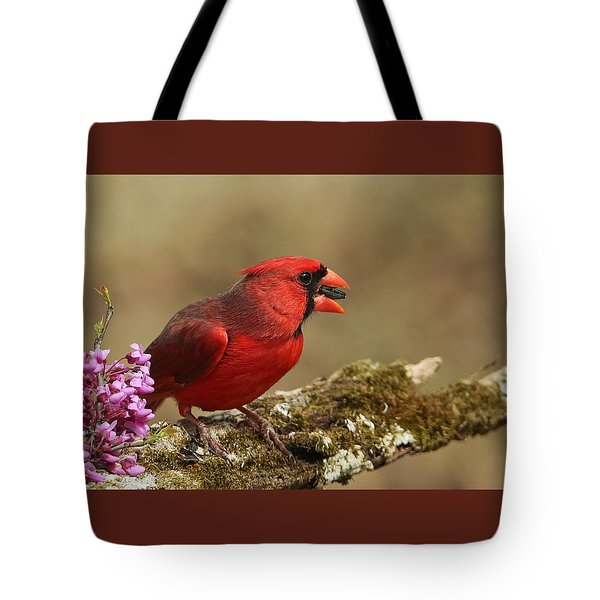 Cardinal In Spring Tote Bag by Sheila Brown
