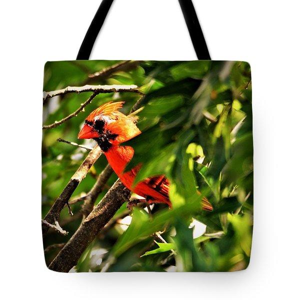 Cardinal In Tree Tote Bag