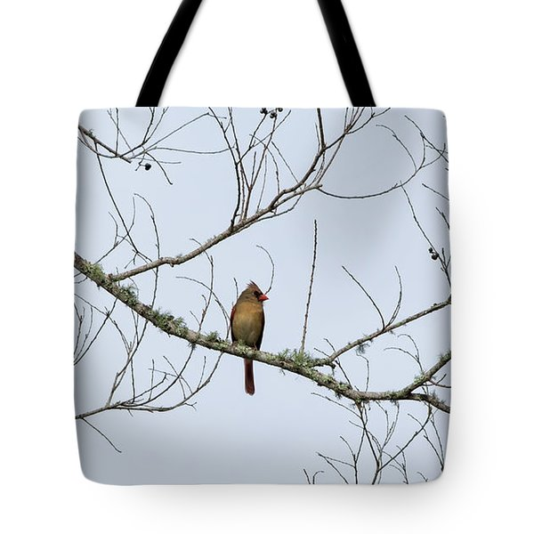 Cardinal In Tree Tote Bag by Richard Rizzo
