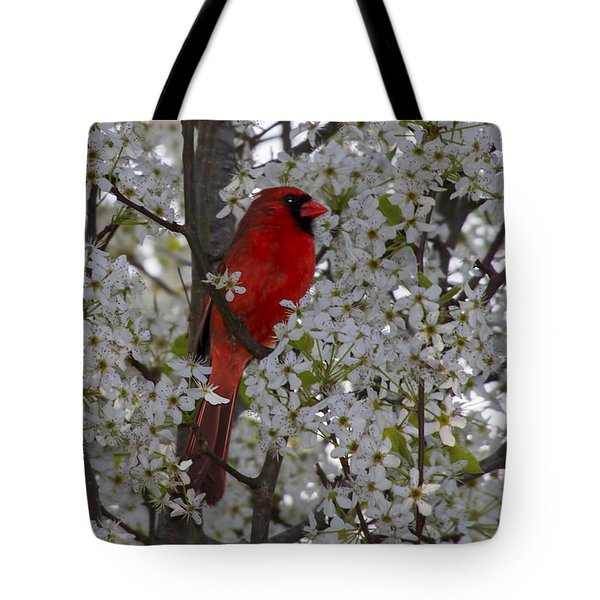 Tote Bag featuring the photograph Cardinal In White Blossoms by Barbara Bowen