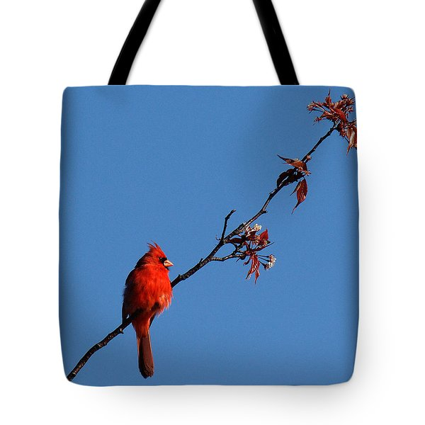 Tote Bag featuring the photograph Cardinal On A Cherry Branch Dsb033 by Gerry Gantt