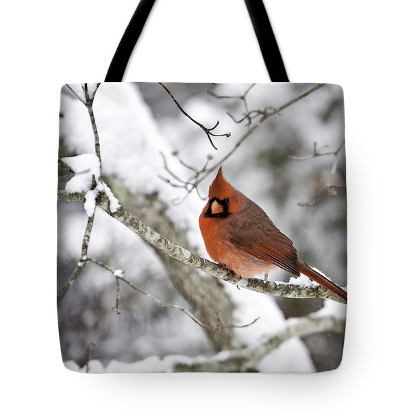 Cardinal On Snowy Branch Tote Bag by Rob Travis
