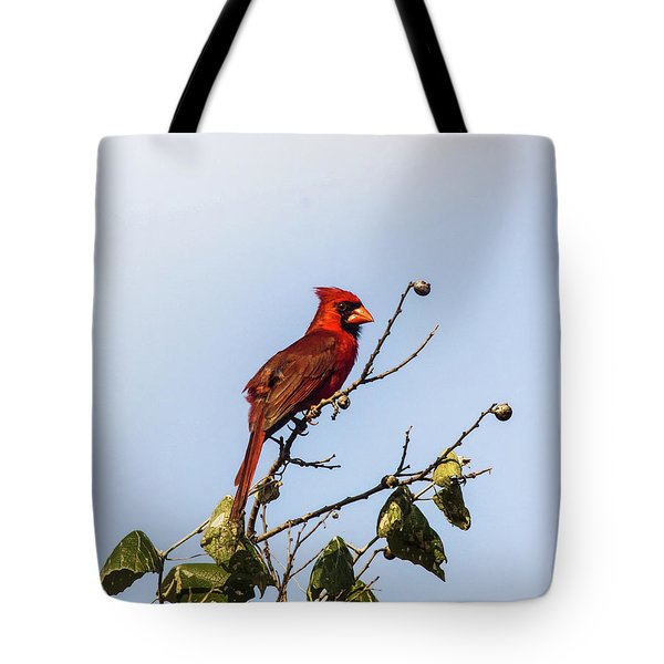 Tote Bag featuring the photograph Cardinal On Treetop by Robert Frederick
