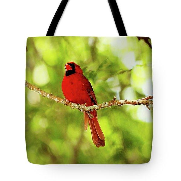 Cardinal Stare Tote Bag