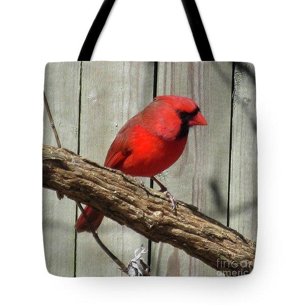 Cardinal Waiting For Spring Tote Bag