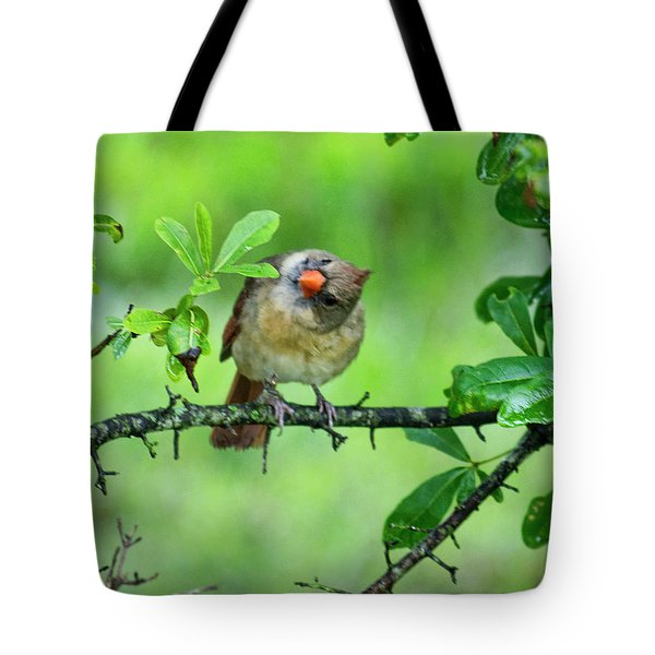 Cardinal Ways Tote Bag