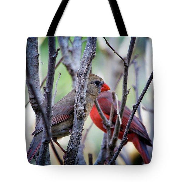 Cardinals Pair Tote Bag