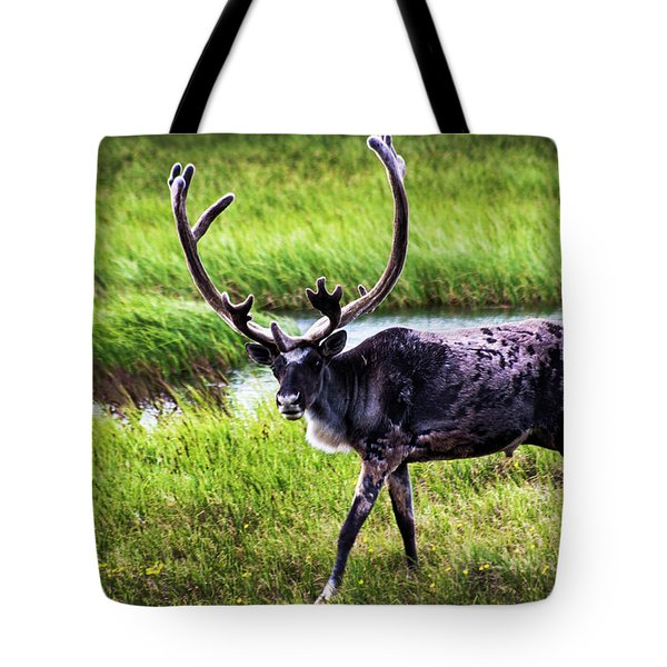 Tote Bag featuring the photograph Caribou by Anthony Jones