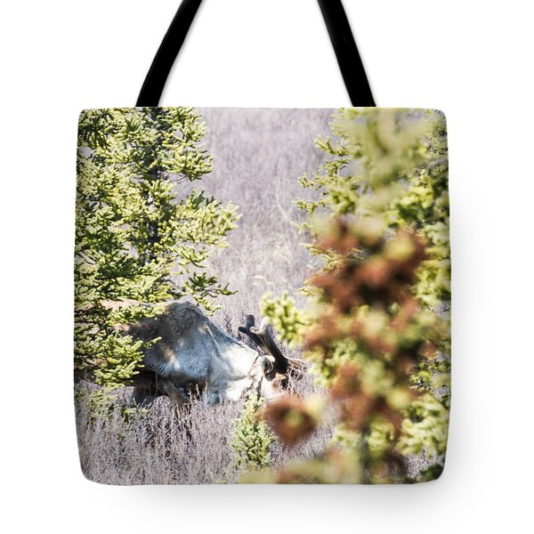 Caribou Eating Lichens Tote Bag by Allan Levin