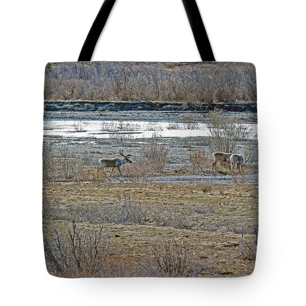 Caribou Feeding In Snow Fed River Tote Bag by Allan Levin