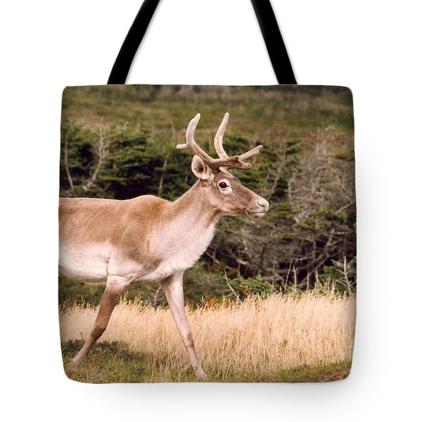 Caribou Tote Bag by Mary Mikawoz