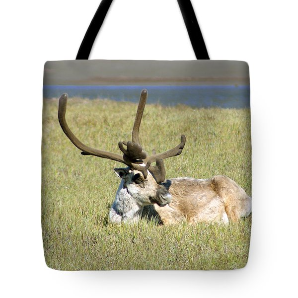 Caribou Rest Tote Bag by Anthony Jones