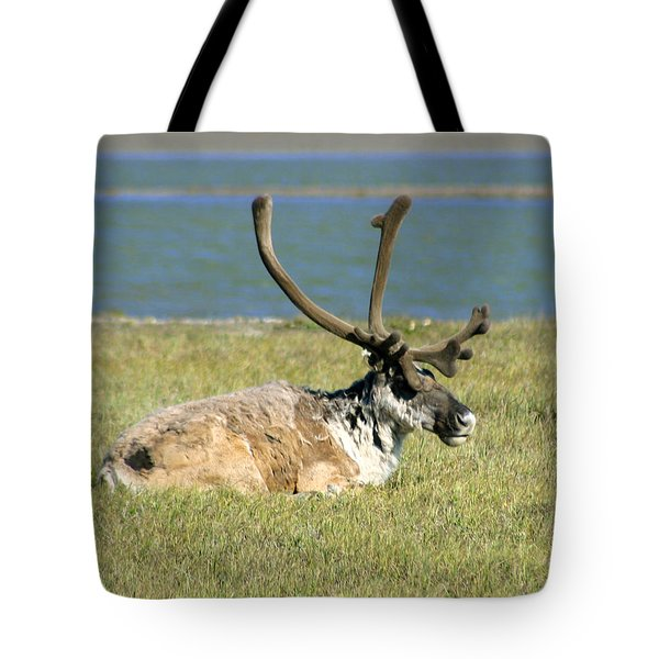 Caribou Resting Tote Bag by Anthony Jones