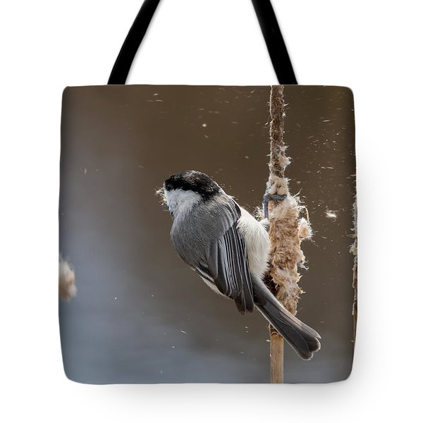 Carolina Chickadee Feeding On Cattail Tote Bag