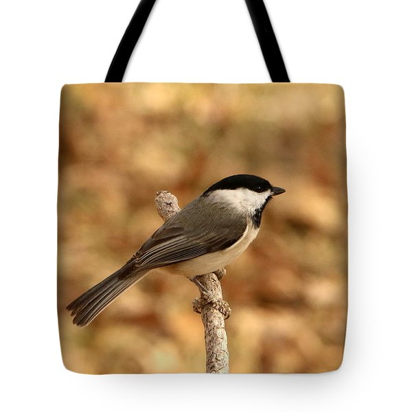 Carolina Chickadee On Branch Tote Bag