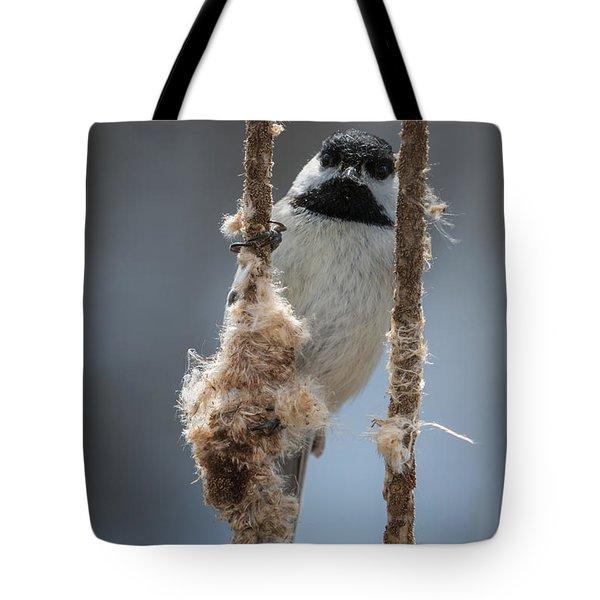 Carolina Chickadee On Cattails Tote Bag