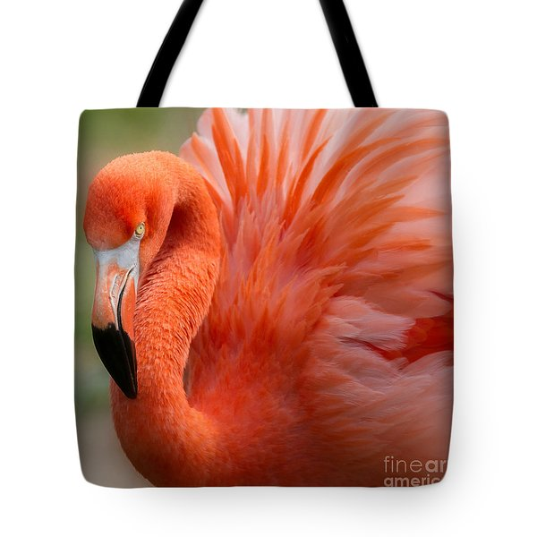 Caribbean Flamingo Tote Bag by Chris Scroggins