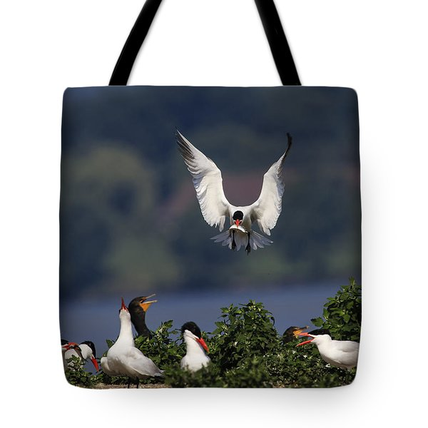 Caspian Tern Colony Tote Bag by Gary Hall